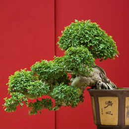 Stamps      with the theme Bonsai     '