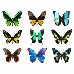 Stamps      with the theme Butterflies     '
