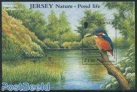 Kingfisher s/s