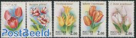 Tulips 5v