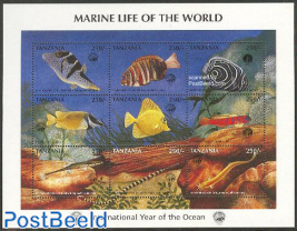 Int. ocean year 9v m/s