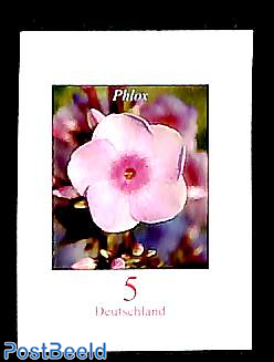 Definitive, flower 1v s-a