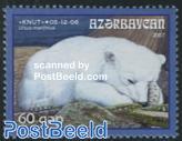 Icebear Knut 1v