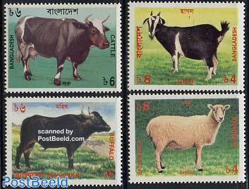Cattle 4v