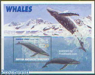 Humpback whale s/s