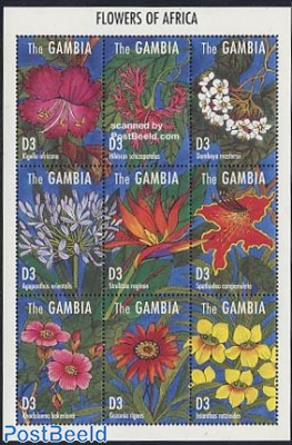 Flowers 9v m/s, Kigelia