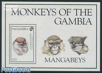 Monkey s/s, Cercocebus Torquatus