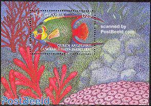 Queen angelfish s/s