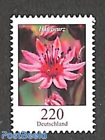 Flower definitive 1v, Hauswurz