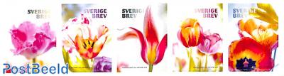 Tulips 5v s-a