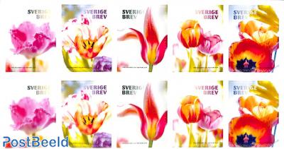 Tulips 2x5v foil booklet
